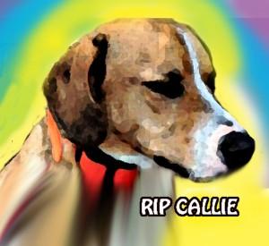 Callie RIP for Junior copy