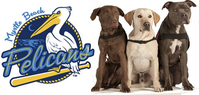 Pelicans 3dogs callie