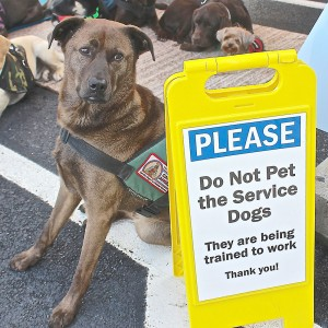 Do-not-pet-service-dogs
